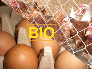Eier und Huhn