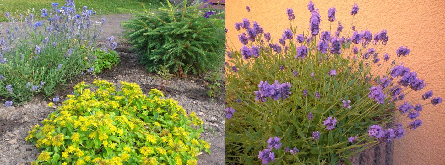 bluehende Pflanzen